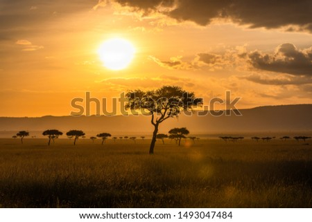 Acacia trees in front of the sunset in the Masai Mara