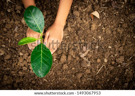 Planting trees, planting hands, planting trees, planting soil, saving earth and reducing global warming. #1493067953