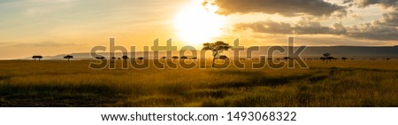 A panoramic view on the Masai Mara while sunset #1493068322