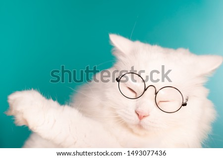 Cute domestic pet in round transparent glasses. Furry cat on blue background in studio. Animals, education, science concept.