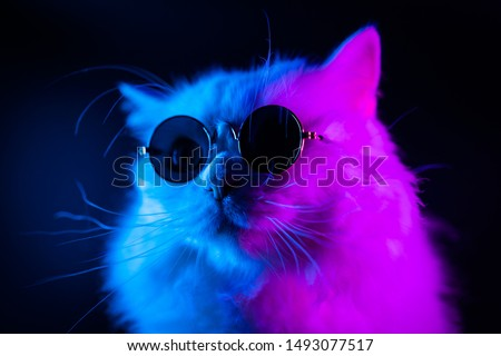 Portrait of white furry cat in fashion eyeglasses. Studio neon light. Luxurious domestic kitty in glasses poses on black background.