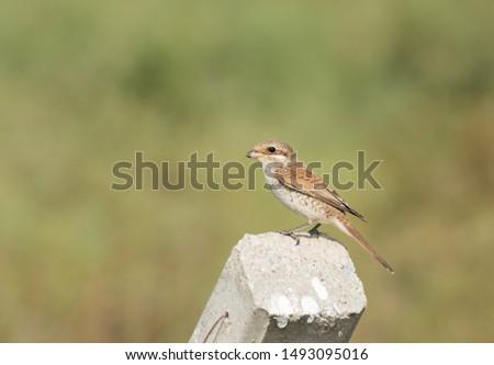 photos of wildlife and wildlife birds #1493095016