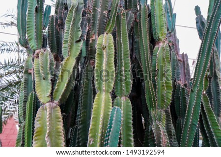 close up, cactus have pointed thorn don't touch it. #1493192594