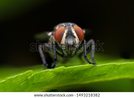 Close up macro shot House fly, Fly, House fly on leaf Royalty-Free Stock Photo #1493218382