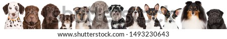 group of dogs portrait on white background #1493230643