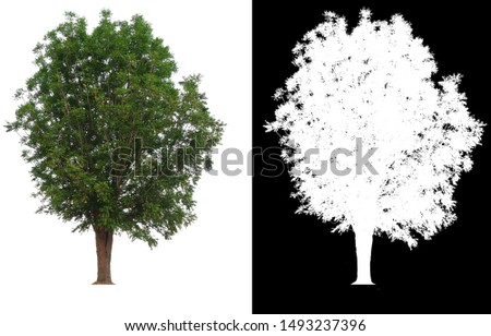 single tree with clipping path and alpha channel #1493237396