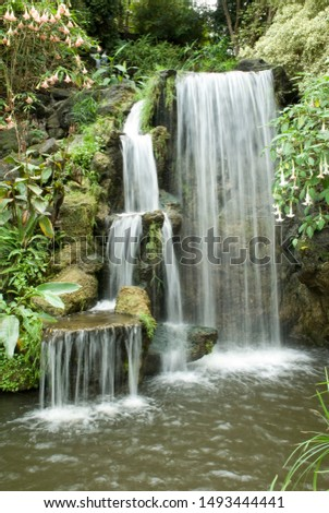 There garden waterfalls with lush green foliage #1493444441