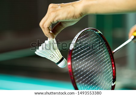 Hands of BADMINTON player holding racket serving white new shuttlecock with blur Badminton court background, popular indoor sport concept #1493553380
