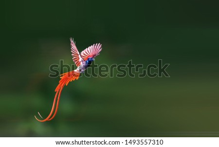 Asian Paradise-Flycatcher flying in the sky #1493557310
