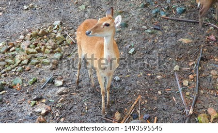 Pictures of wild deer and nature