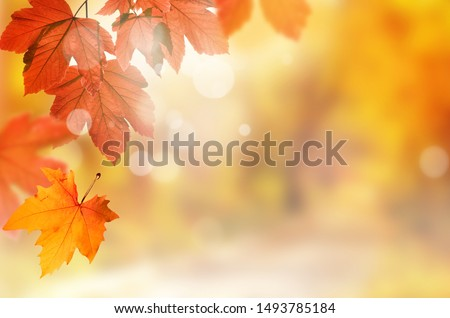 Falling yellow leaves and park bokeh background with sun beams. Autumn landscape. #1493785184