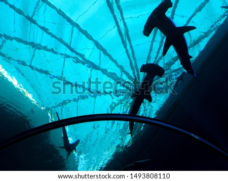 Hammerhead shark swimming in the aquarium in a light view at S.E.A Aquarium Sentosa, Singapore, 14 July 2019. #1493808110