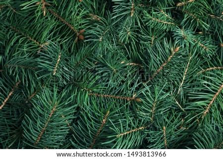 Branches of Christmas tree as background, closeup Royalty-Free Stock Photo #1493813966