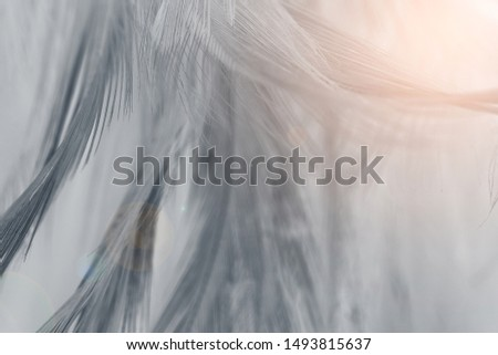 Beautiful black feather pattern  texture background with Orange light flare #1493815637