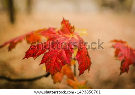 red bright autumn leaf in the fog #1493850701