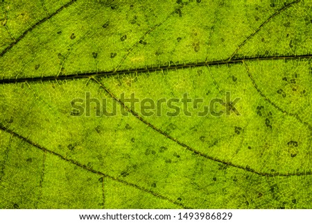 Background image of a leaf of a tree close up #1493986829