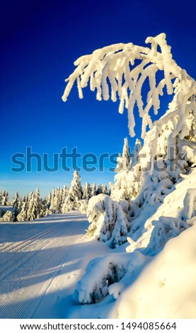 Snow covered tree in winter nature scene. Winter snow tree view. Winter snow scene. Ski track in winter snow scene #1494085664