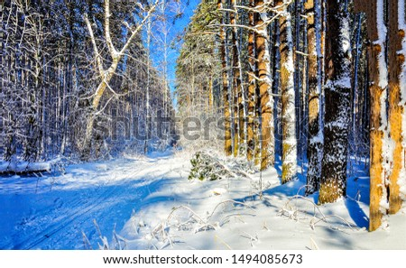 Winter snow forest road landscape. Snowy winter forest road. Winter snow forest road view. Winter road snow forest #1494085673