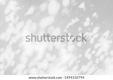 Abstract leaves gray shadow background with light bokeh, natural leaves tree branch falling on white concrete wall texture for background and wallpaper, monochrome, nature shadows art on wall 