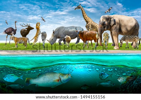 Wildlife Conservation Day Wild animals to the home. Or wildlife protection #1494155156