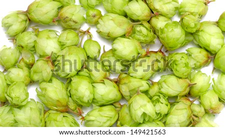 Many hops cones as background #149421563
