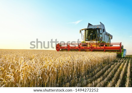 Combine harvester harvests ripe wheat. agriculture Royalty-Free Stock Photo #1494272252