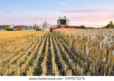 Combine harvester harvests ripe wheat. agriculture #1494272276