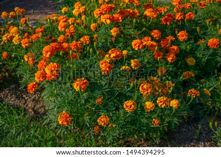 Orange flower, blurred green background enhances the color of the flower. #1494394295