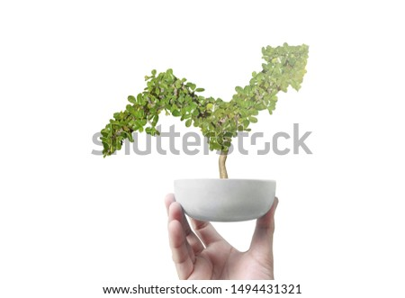 Potted green plant grows up in arrow shape in a hand #1494431321