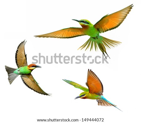 Blue-tailed Bee-eater in flight isolated on white background #149444072