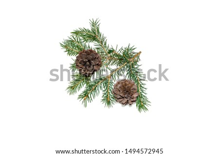 Coniferous tree branch and cones on a white background close-up #1494572945