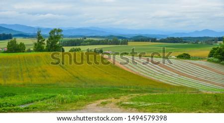 Beautiful rural scenery at summer day in Furano Township, Hokkaido, Japan. #1494579398