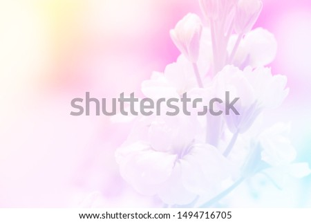 blurred background of unicorn color flower #1494716705