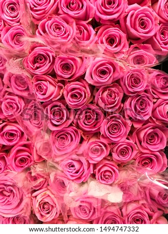 Beautiful pink roses close-up background    #1494747332