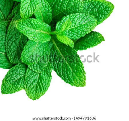 Mint leaves isolated on white background. Heap of Spearmint leaves, peppermint, close up #1494791636