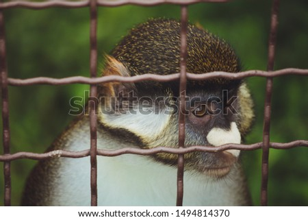 Cute beautiful monkey is sitting in a cage on a background of green grass. #1494814370