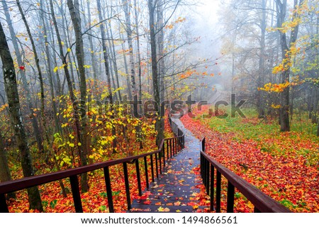 Red autumn forest park stair landscape. Autumn forest stairway view. Red autumn forest stairway down. Red autumn wallpaper #1494866561