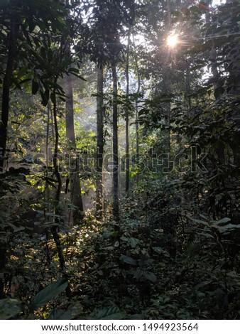 Malaysia's Rainforest View. Shot at Sungai Tekala, Selangor #1494923564