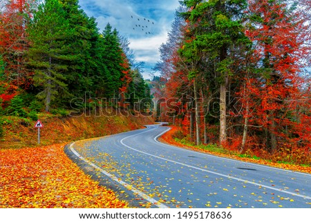 Autumn. Colorful leaves falling from trees. Wooden forest houses. Amazing landscape. Uludag National Park. Istanbul, Bursa, Turkey. Royalty-Free Stock Photo #1495178636