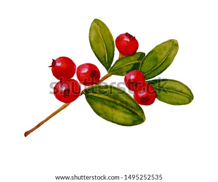 Watercolor painted illustration of lingonberry (cowberry) with leaves. Isolated. #1495252535