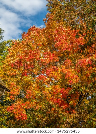 fragment of colored fall foliage tree #1495295435