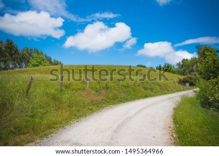 Green lawn with blue sky. Green lawn background. Nature landscape background. Green grass texture. Spring landscape in sunny day.  #1495364966