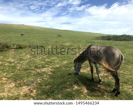 Pasture and horses. North Brazil.  #1495466234