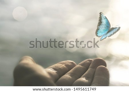 a delicate butterfly flies away from a woman's hand #1495611749