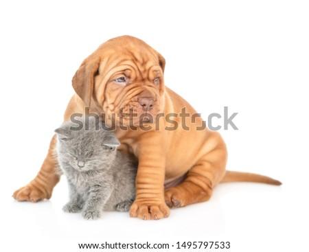 Mastiff puppy hugging sleepy kitten. isolated on white background #1495797533