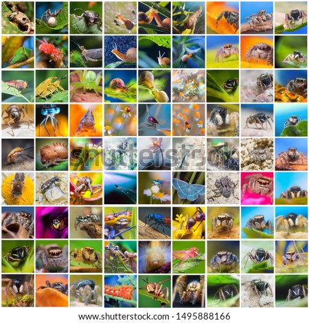 Collage of many different  pictures of various insects and spiders, closeup of arthropods Royalty-Free Stock Photo #1495888166