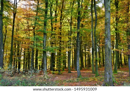 The forest at the beginning of autumn #1495931009