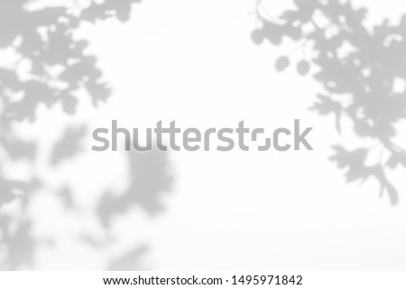 Gray shadow of the hawthorn tree leaves on a white wall. Abstract neutral nature concept blurred background. Space for text. Overlay effect for photo. #1495971842