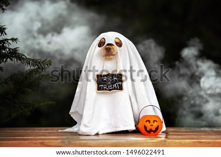 funny dog in ghost costume posing for Halloween #1496022491