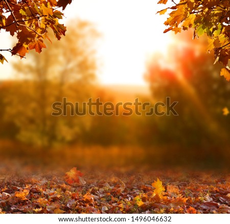 Beautiful autumn landscape with yellow trees,green and sun. Colorful foliage in the park. Falling leaves natural background #1496046632